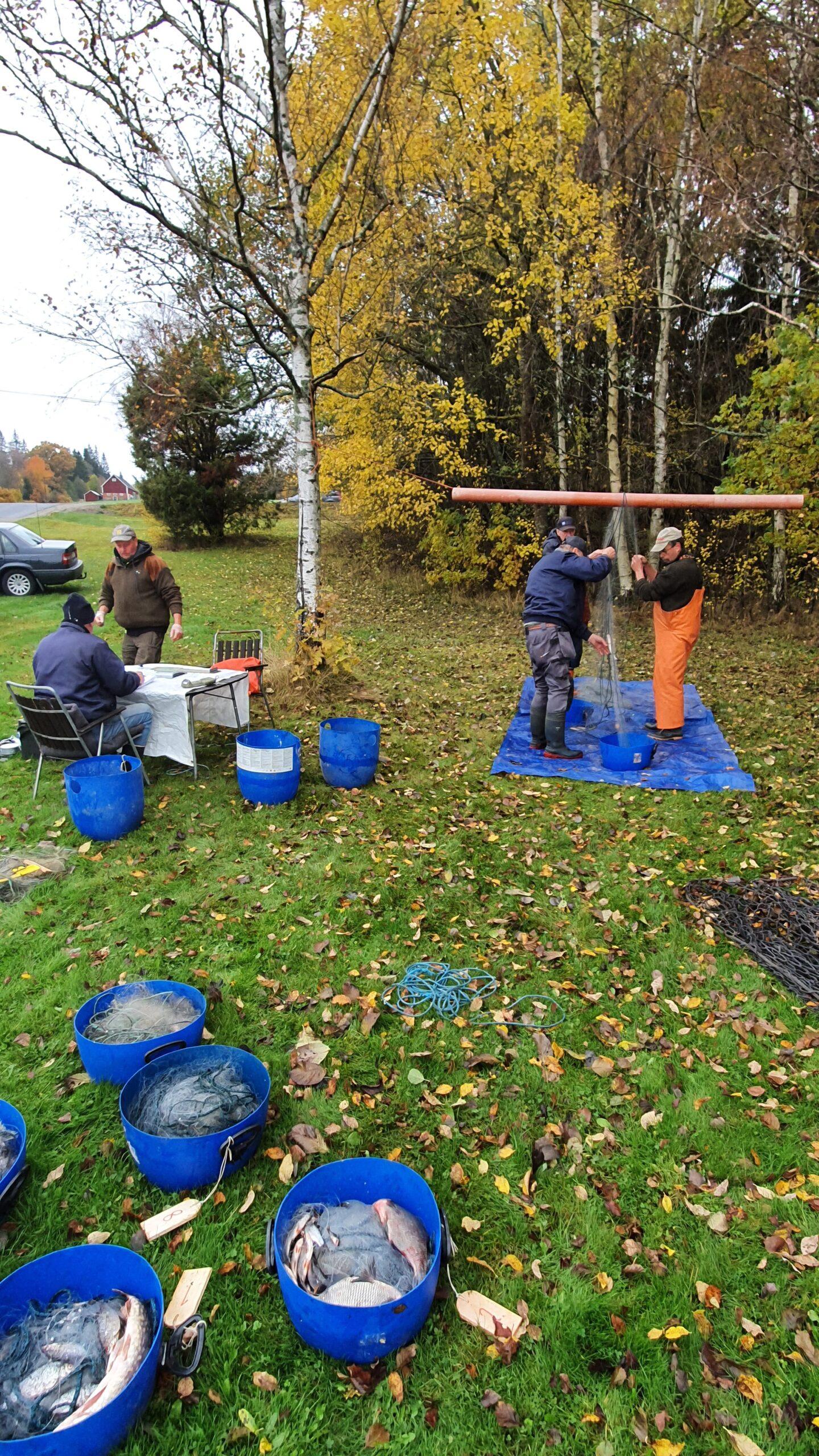 Provfiske i Dansjön och Furen under November
