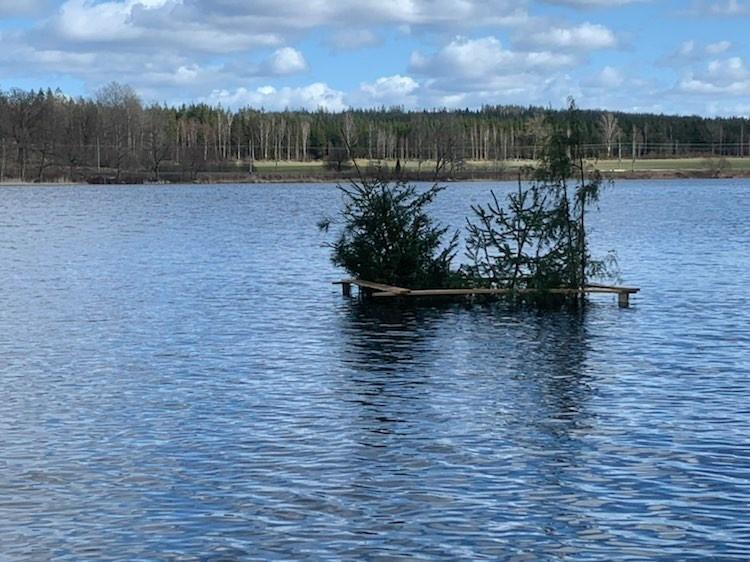 Ny risvas i Dansjön