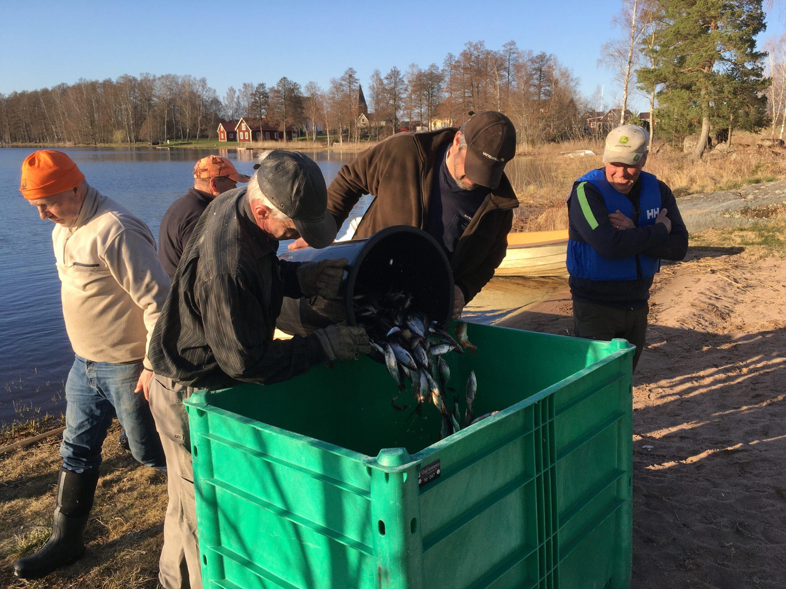 Reduktionsfiske i Furen 2021 är igång